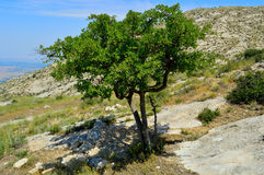 Paesaggio della montagna, albero Fotografia Stock