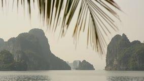 Paesaggio della montagna alla baia di Halong, Vietnam Filiali delle palme video d archivio