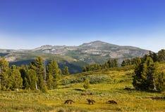 Paesaggio della montagna Altai, Siberia Immagini Stock Libere da Diritti