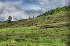Paesaggio della montagna Altopiani, i picchi di montagna, gole e valli Le pietre sui pendii Fotografia Stock