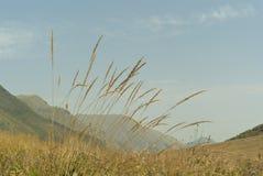 Paesaggio della montagna attraverso erba asciutta Fotografia Stock