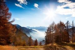 Paesaggio della montagna in autunno: alberi di larice, sole brillante, va nebbioso Immagini Stock