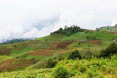 Paesaggio della montagna in Chiang Mai, Tailandia Fotografia Stock Libera da Diritti