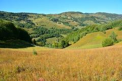 Paesaggio della montagna con erba, la foresta dell'abete ed il villaggio gialli Immagini Stock