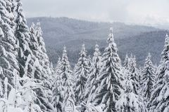 Paesaggio della montagna con gli abeti bianchi Fotografie Stock