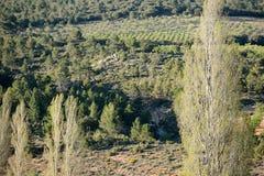 Paesaggio della montagna con gli alberi di pioppo nella priorità alta Fotografia Stock