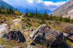 Paesaggio della montagna con gli alberi e una strada rurale Altai, Russia Fotografia Stock Libera da Diritti