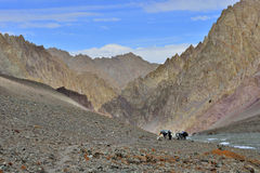Paesaggio della montagna con i cavalli ed il cavallerizzo fotografia stock