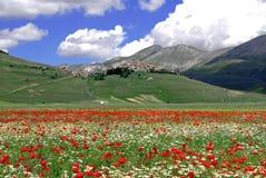 Paesaggio della montagna con i fiori Fotografie Stock