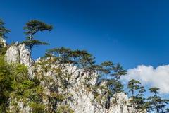 Paesaggio della montagna con i pini neri Fotografia Stock Libera da Diritti