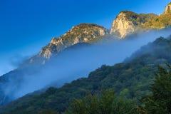 Paesaggio della montagna con i pini neri Immagine Stock