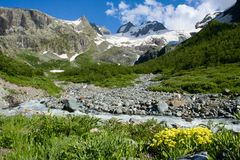 Paesaggio della montagna con il fiume ed i fiori Immagine Stock Libera da Diritti