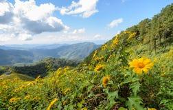 Paesaggio della montagna con il moutain di fioritura selvaggio del girasole messicano fotografia stock libera da diritti