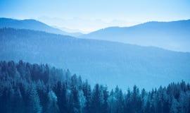 Paesaggio della montagna con l'abete rosso e pini nelle alpi austriache durante il giorno soleggiato luminoso calmo a dicembre du Immagini Stock Libere da Diritti