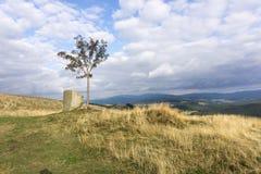 Paesaggio della montagna con l'albero di sorba solo Immagine Stock