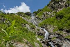 Paesaggio della montagna con la cascata in montagne di Carpathians Fotografia Stock
