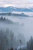 Paesaggio della montagna con la foresta e la nebbia dell'abete Fotografia Stock