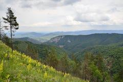 Paesaggio della montagna con la valle ed i fiori Immagini Stock