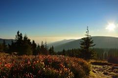 Paesaggio della montagna con molti cespugli della bacca Immagini Stock Libere da Diritti
