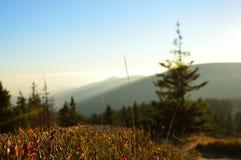 Paesaggio della montagna con molti cespugli della bacca Fotografia Stock
