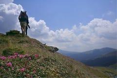 Paesaggio della montagna con rododendro e la gente Fotografia Stock