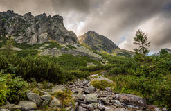 Paesaggio della montagna con un'insenatura Immagini Stock Libere da Diritti