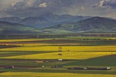 Paesaggio della montagna dei giacimenti del seme di ravizzone Fotografia Stock