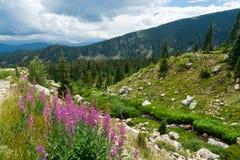 Paesaggio della montagna del Colorado Immagini Stock