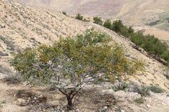 Paesaggio della montagna del deserto (vista aerea), Giordania, Medio Oriente Fotografie Stock Libere da Diritti