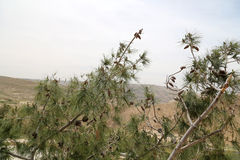 Paesaggio della montagna del deserto (vista aerea), Giordania, Medio Oriente Fotografia Stock Libera da Diritti
