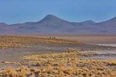 Paesaggio della montagna del plateau di Altiplano in Bolivia Immagine Stock