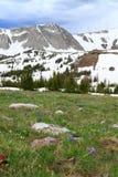 Paesaggio della montagna del Wyoming Fotografie Stock
