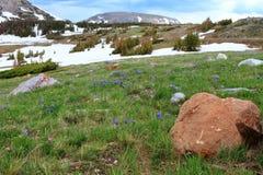 Paesaggio della montagna del Wyoming Fotografia Stock