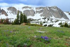 Paesaggio della montagna del Wyoming Immagini Stock