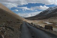 Paesaggio della montagna dell'Himalaya nel ladak, leh India Fotografia Stock