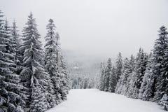 Paesaggio della montagna della neve di inverno in Bulgaria immagini stock libere da diritti