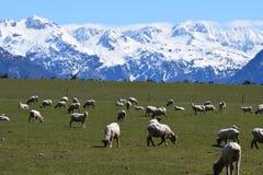 Paesaggio della montagna della Nuova Zelanda Fotografie Stock