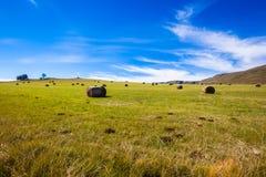 Paesaggio della montagna delle balle dell'erba verde Immagini Stock