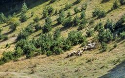 Paesaggio della montagna di autunno in Bulgaria Fotografie Stock