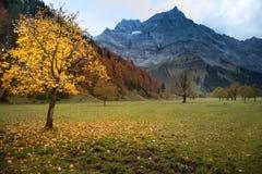 Paesaggio della montagna di autunno nelle alpi con l'albero di acero Immagine Stock