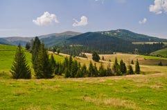 Paesaggio della montagna di estate con gli abeti nella priorità alta Ukra Fotografie Stock Libere da Diritti