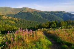 Paesaggio della montagna di estate con i fiori rosa nella priorità alta Fotografie Stock Libere da Diritti