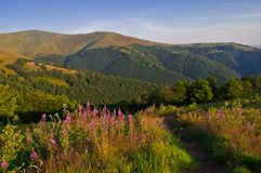 Paesaggio della montagna di estate con i fiori rosa nella priorità alta Fotografie Stock