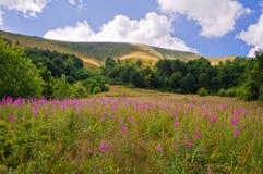 Paesaggio della montagna di estate con l'salice-erba dei fiori nel foregr Fotografia Stock