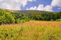 Paesaggio della montagna di estate con l'salice-erba dei fiori nel foregr Immagini Stock