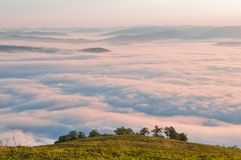Paesaggio della montagna di estate con la nebbia del mare ed alberi nella parte anteriore Immagini Stock Libere da Diritti