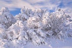 Paesaggio della montagna di inverno Immagine Stock Libera da Diritti