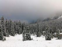 Paesaggio della montagna di inverno Abeti rossi spruzzati con neve Nebbia sopra il legno immagine stock