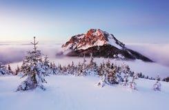 Paesaggio della montagna di inverno con l'albero Fotografia Stock