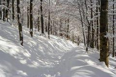 Paesaggio della montagna di inverno in montagne di Bieszczady Immagine Stock Libera da Diritti